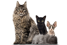 Load image into Gallery viewer, Multi Cat Subscription (PN) - 6 Month Gift
