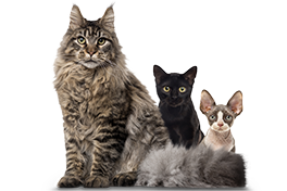 Multi Cat Subscription (NN) - 3 Month Gift