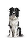 Medium Dog Subscription (RNN) - 6 Month Gift