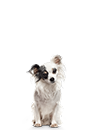 Load image into Gallery viewer, Petite Dog Subscription ( 3 Month Gift )