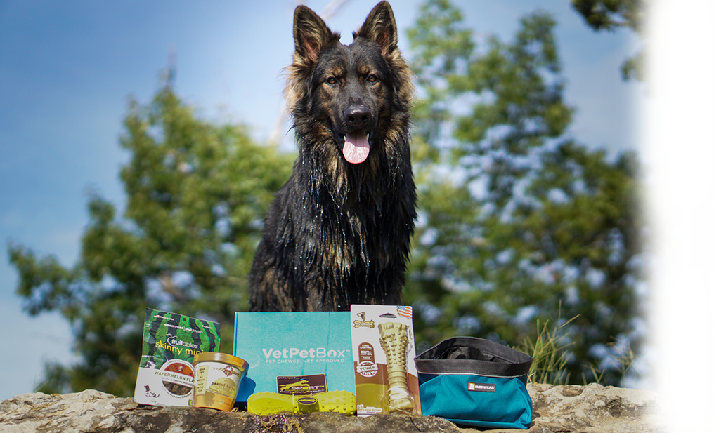 Giant Dog Subscription (RBY) - 6 Month Gift