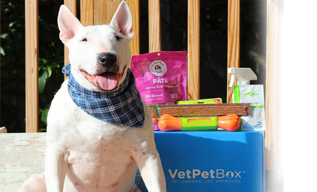 Large Dog Subscription (RGY) - 1 Month Gift