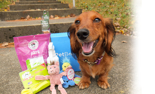Petite Dog Subscription ( 6 Month Gift )