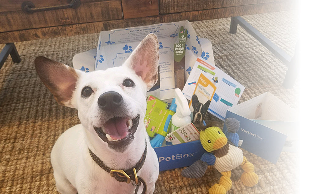 Small Dog Subscription (RGY) - 6 Month Gift