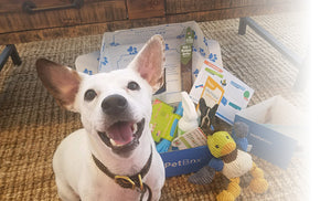 Small Dog Subscription (PPY) - 1 Month Gift