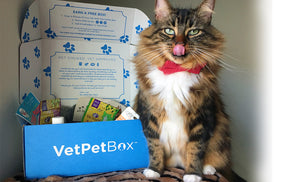 Single Cat Subscription (GY) - Month to Month