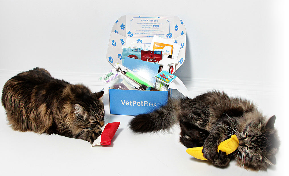 Multi Cat Subscription ( 6 Month Gift )