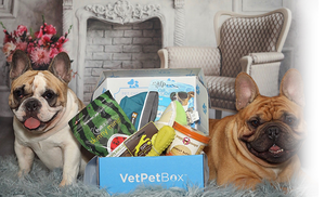 Medium Dog Subscription (RNN) - 3 Month Gift