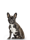 Load image into Gallery viewer, Small Dog Subscription (PBY) - 6 Month