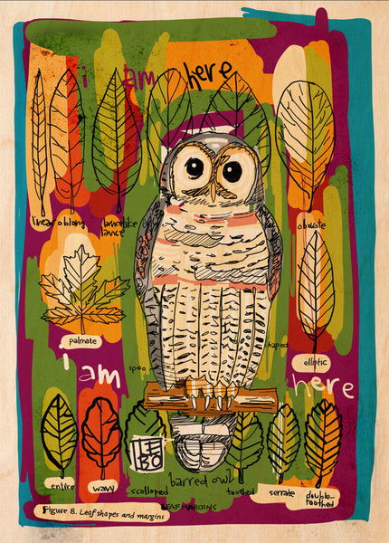 Barred Owl (Cascade Mountains) - Lebo Natural Wood Print