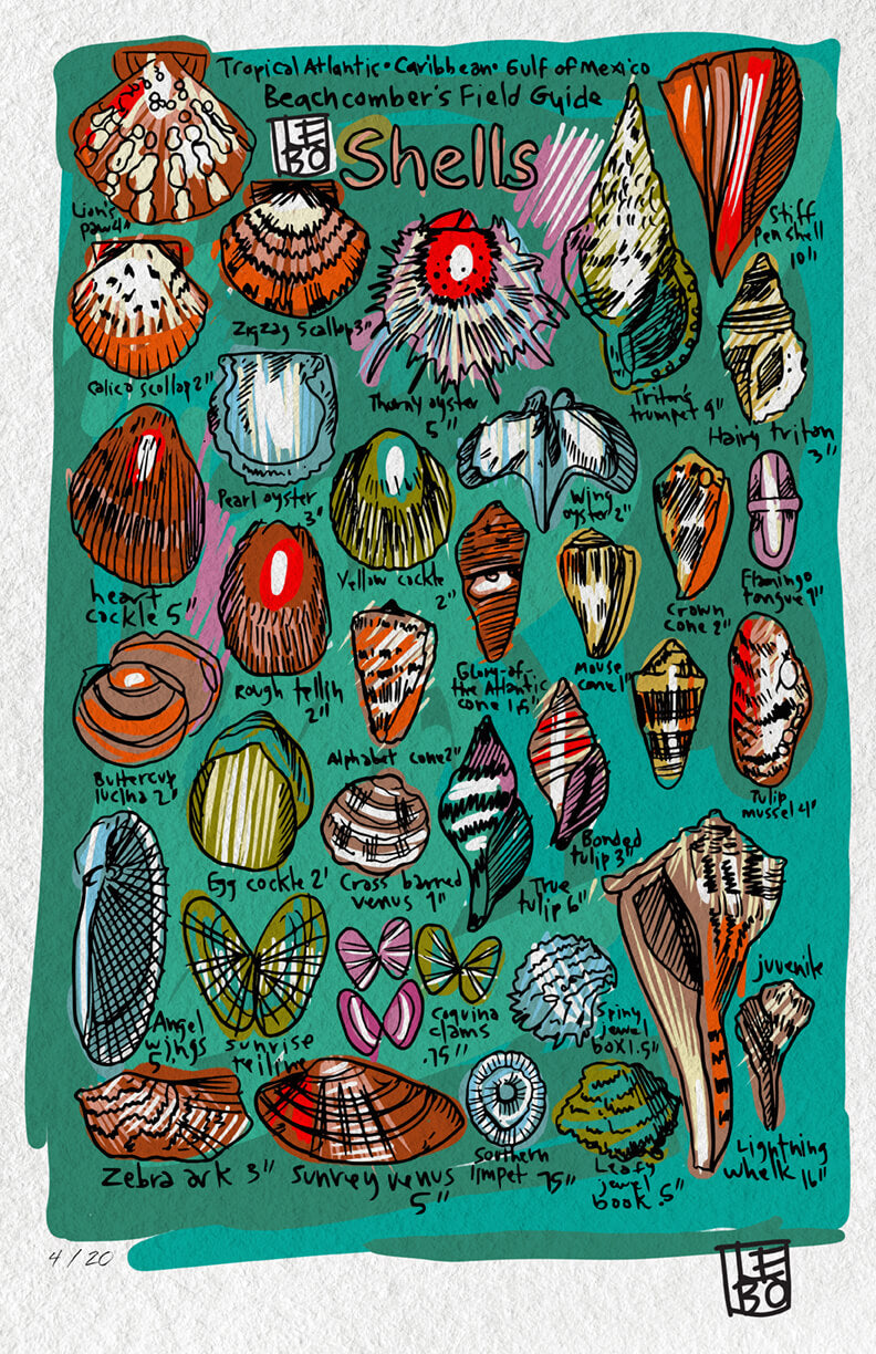 A Beachcombers Field Guide (Everglades)  - 24hrs Limited Edition Sketchbook Print