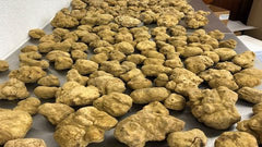The truth about white truffles