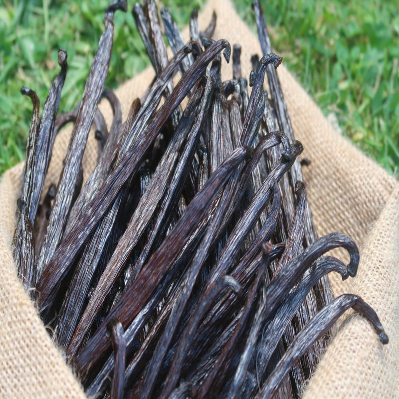wholesale vanilla pods