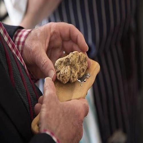 White truffle season