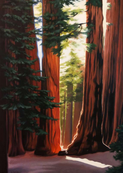 Sequoias Birthday Card
