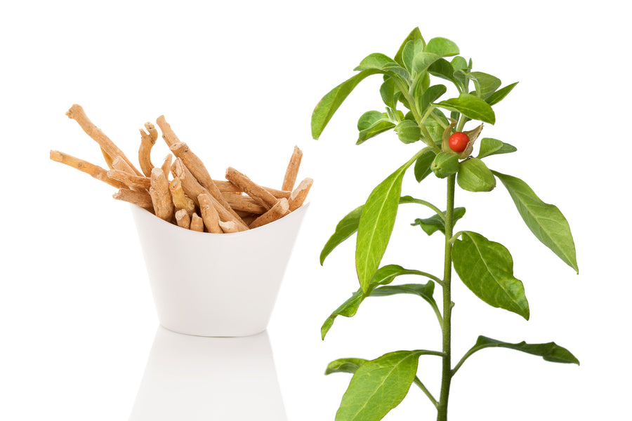 Ashwagandha And Brain Health