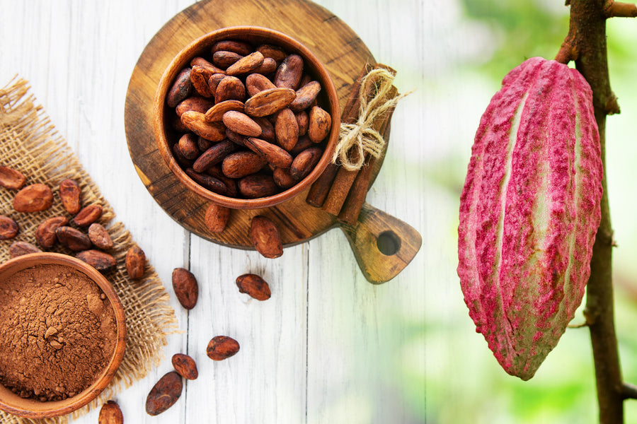 Cacao, Your Brain's Favourite Treat