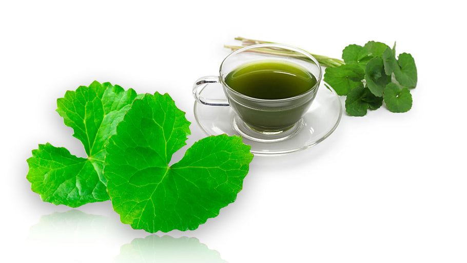 Gotu Kola and Brain Health