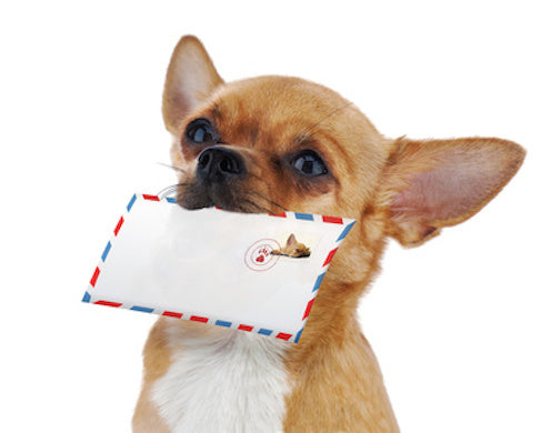 Holiday Shipping Dates 2018 | Whirly Dog Supplies