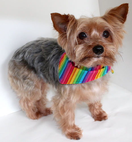 Rainbow Dog Bandana, reversible to solid purple, striped dog bananas