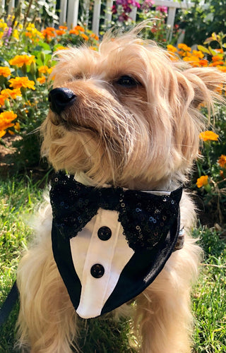 Tuxedo Dog Bandana, black sequin bow tie, fashion dogs neckwear