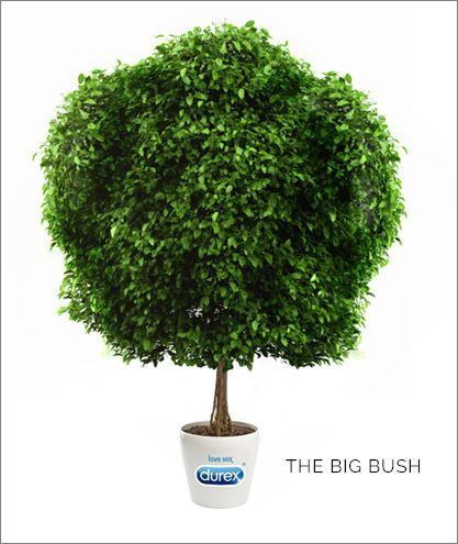 The big bush