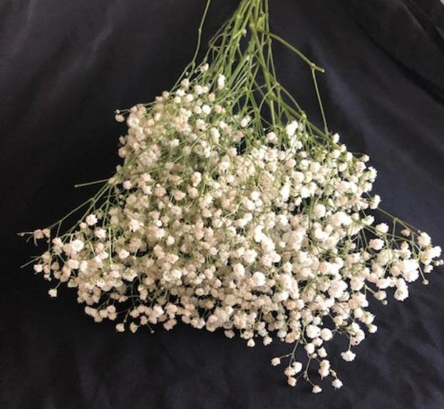 Baby's Breath (Bunch)