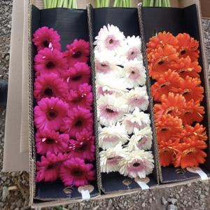 Fresh Flowers, Many Varieties Available, ASK US!