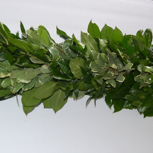Salal, Var Pittosporum & Nagi Mix