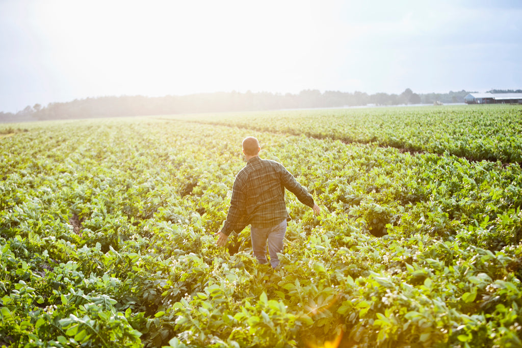 Is Organic Farming Less Productive than Conventional Farming and Does it Take Up More Land?