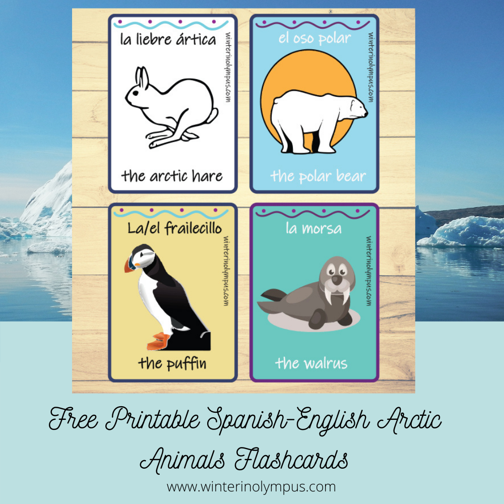 Free Spanish-English Arctic Animals Flashcard Printable