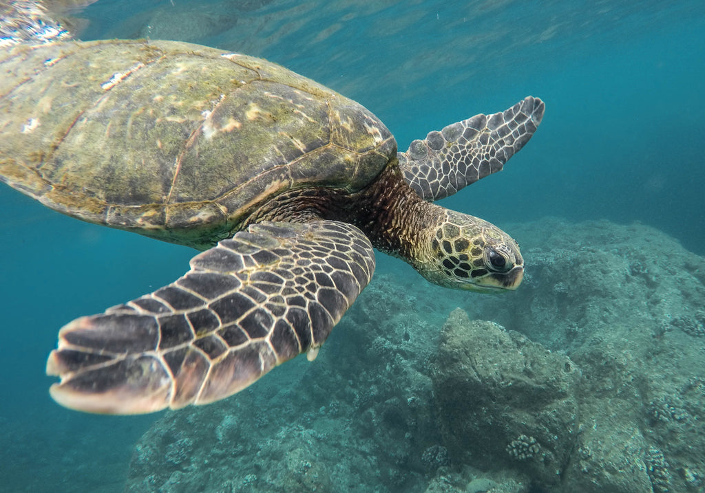 Saving Turtles by going plastic Free