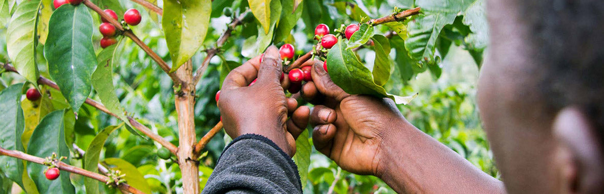 7 Roasters And Their Efforts For The Environment