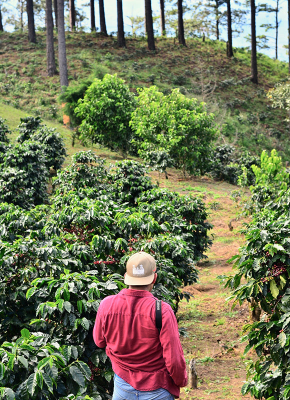 Coffee Farms Of The Americas