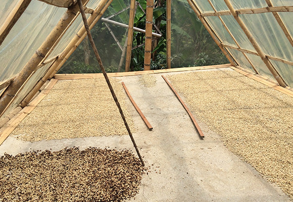 Naturally Processed Coffees On Drying Beds