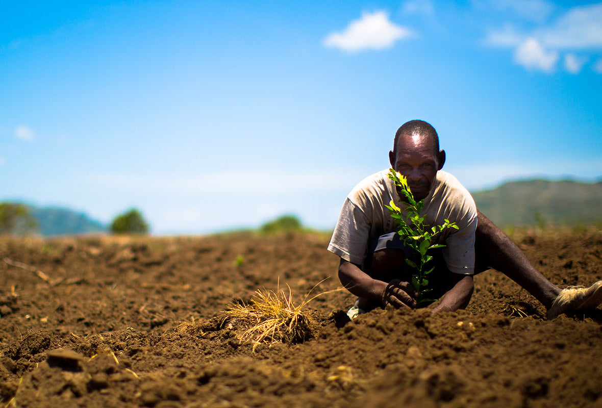 One Tree Planted In Action With A Farmer