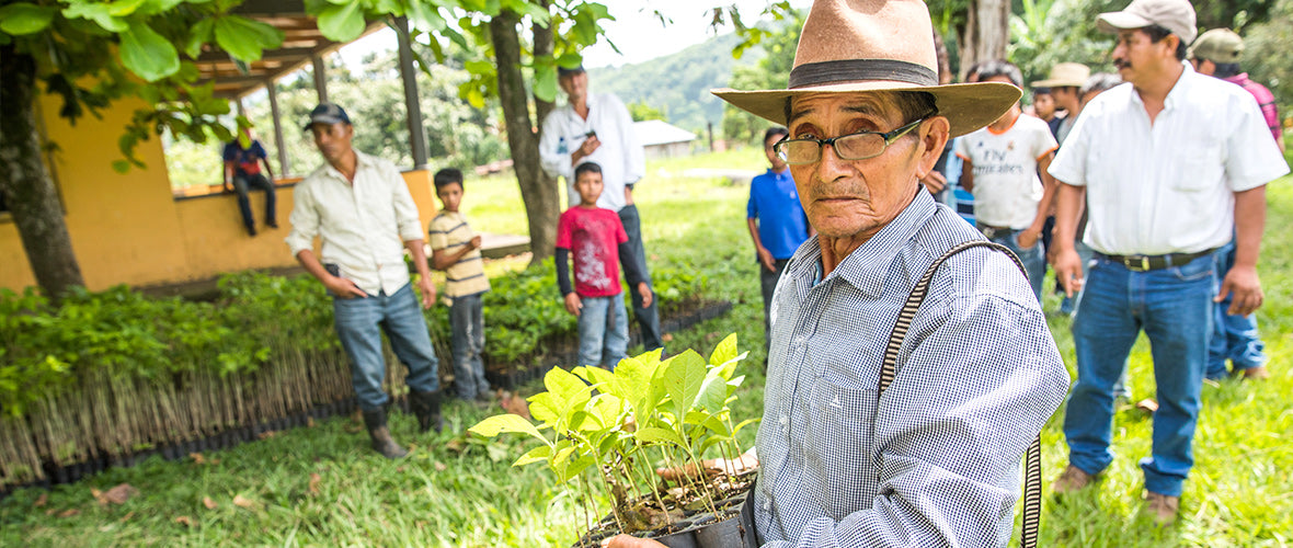 Brew Coffee Plus Supporting Coffee Farmers Of The One Tree Planted Scheme