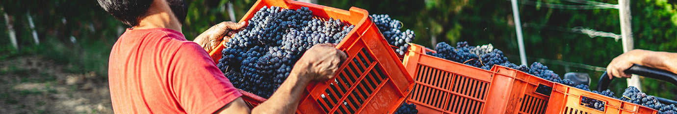 Independent Winemakers and Wineries In Italy