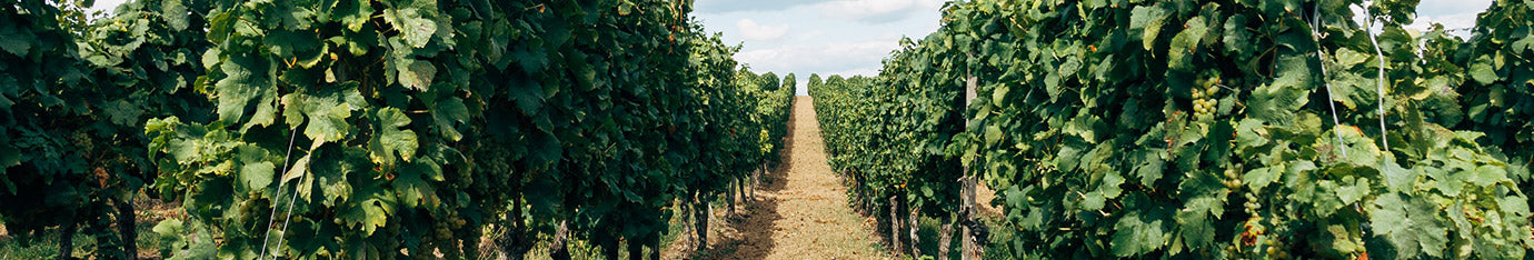 Independent Winemakers and Wineries In South Africa