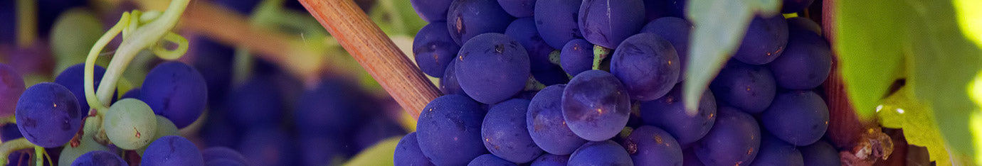 Independent Winemakers and Wineries In USA