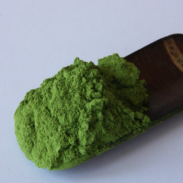 Tea Repertoire Samidori Matcha Powder