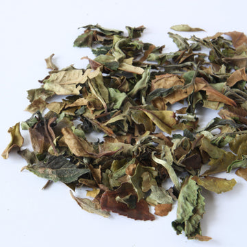 Tea Repertoire Shou Mei Longevity Eyebrow White Tea