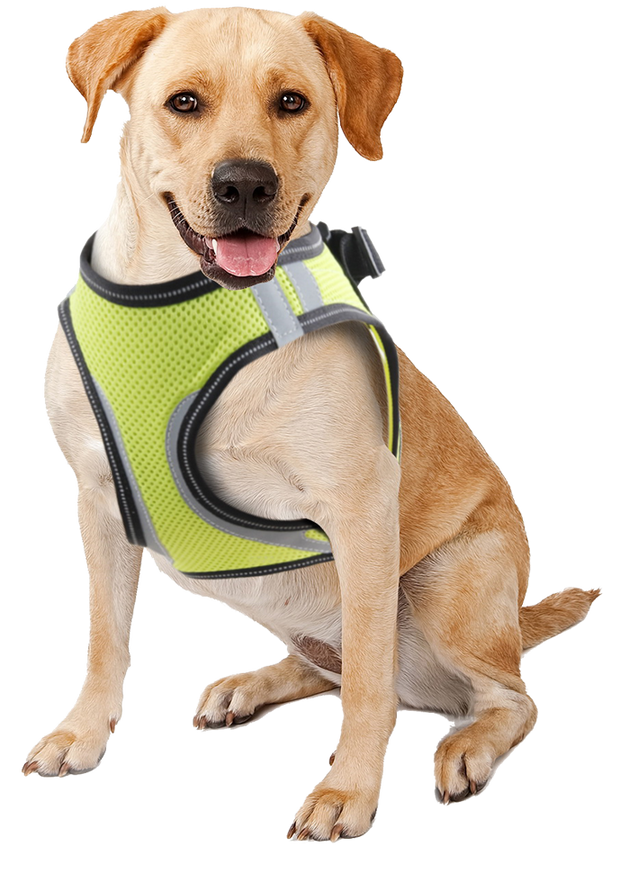 Pawise Doggy Safety Harness M A:32-37cm B:42-46cm