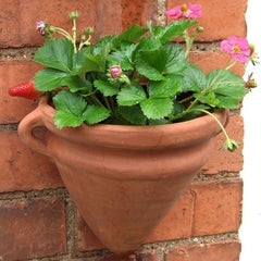 Amphora Wall Pot