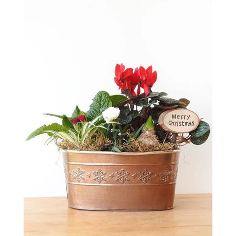 Festive Indoor Planter - Indoor Planters