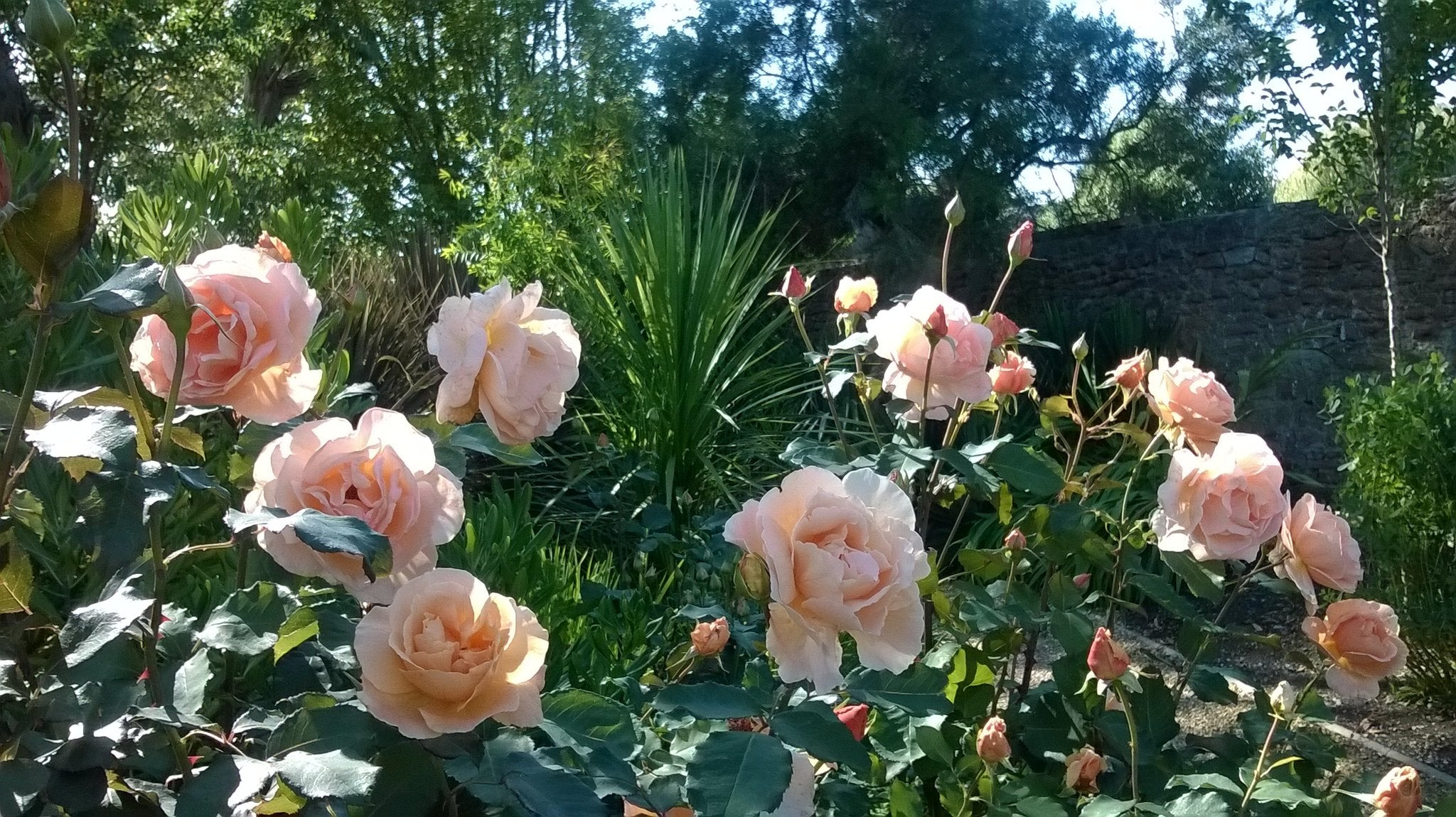 Indoor Plants & Gifts