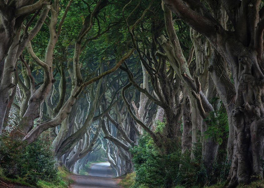 Famous Trees in the United Kingdom