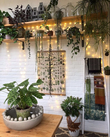 homw packed full of lovely things and plants greenery