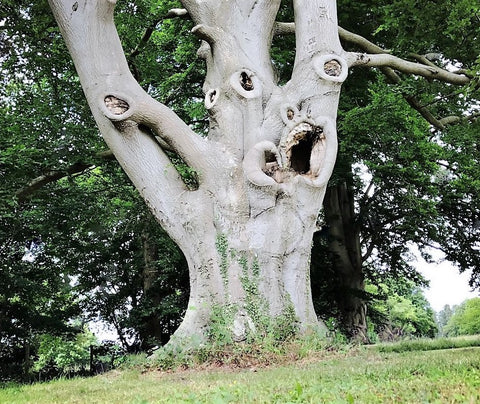 The Horror Tree at Stowlangtoft