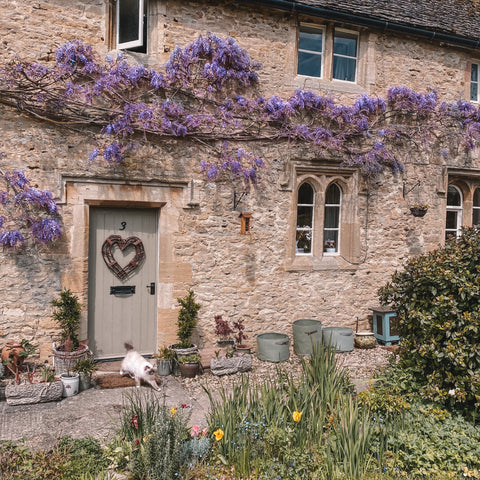 picturesque image of stone cottage with purple wisteria growing